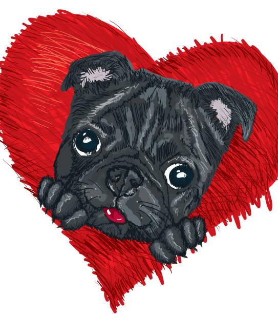 Black Pug in red heart vector art illustration
