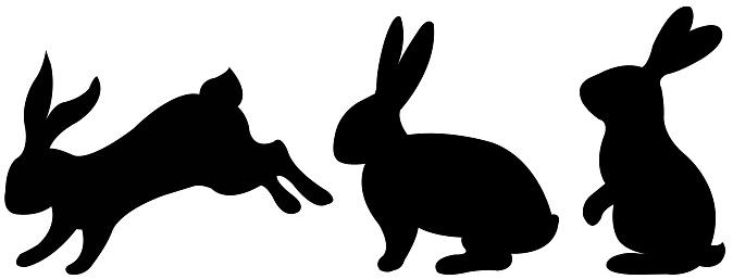 Black Rabbit With White Background