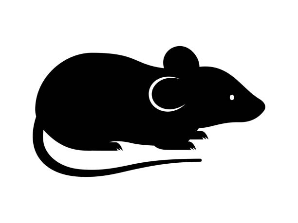 Black rat, mouse, rodent, cute silhouette. Vector shadow Laser cutting path Black rat, mouse, rodent, cute silhouette. Vector shadow Laser cutting path decorative laser cut set stock illustrations