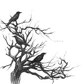 Black ravens on the old tree