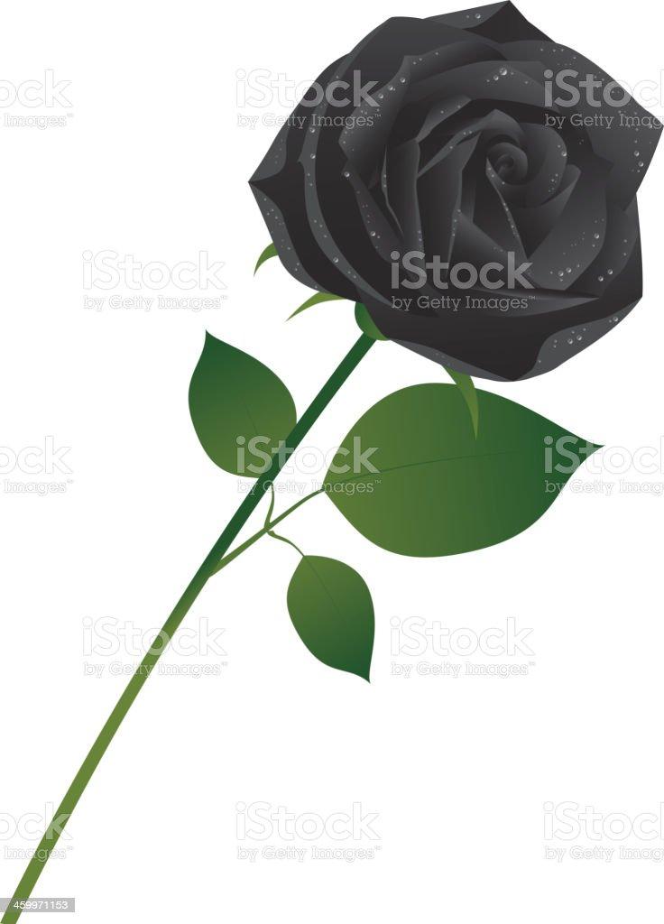 Black rose royalty-free black rose stock vector art & more images of black color