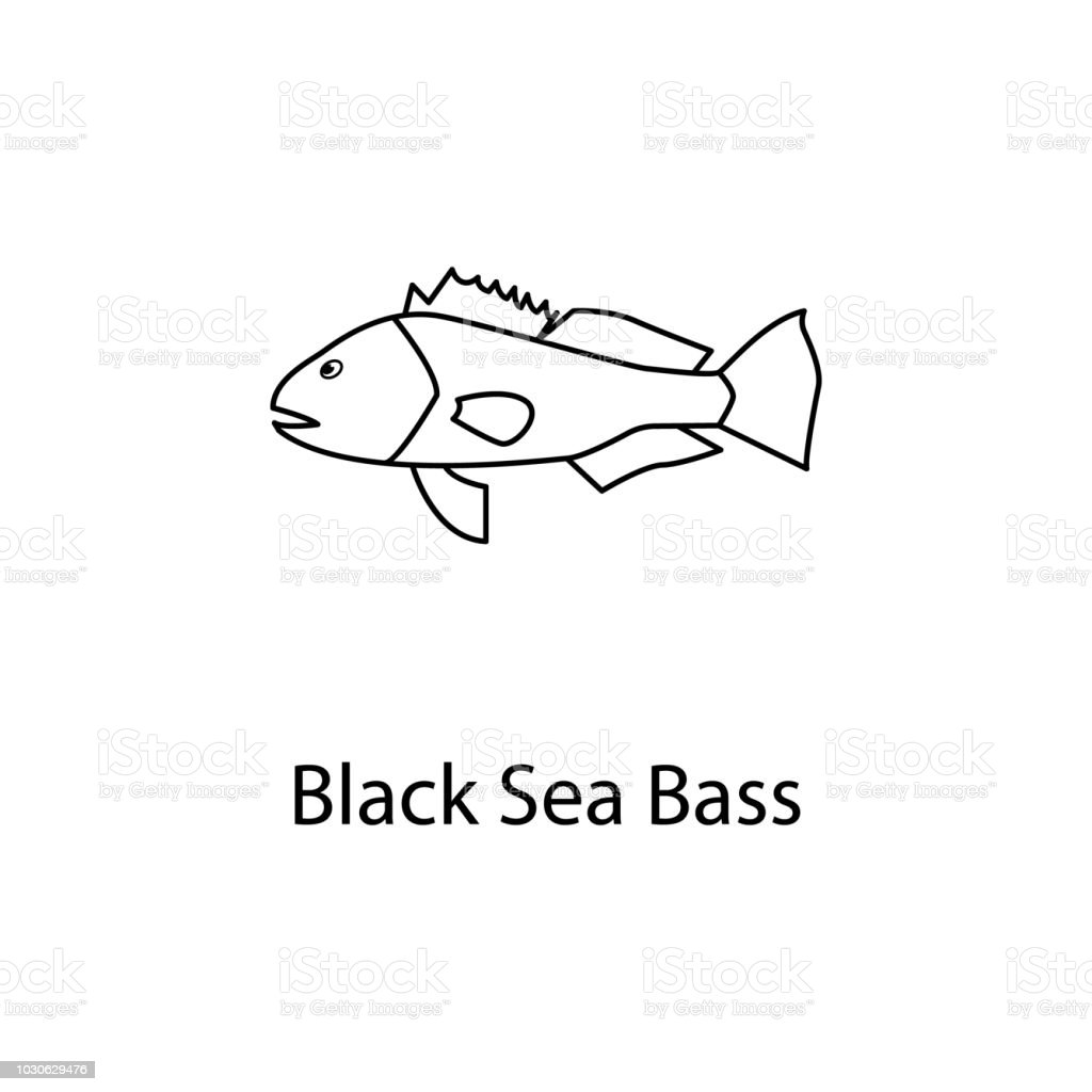 black sea bass icon. Element of marine life for mobile concept and web apps. Thin line black sea bass icon can be used for web and mobile. Premium icon vector art illustration