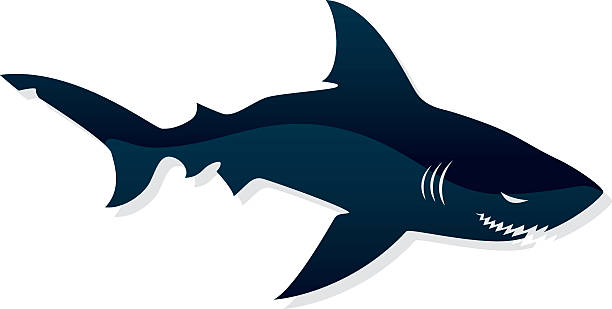Black shark image in white background dont go in the water great white shark stock illustrations