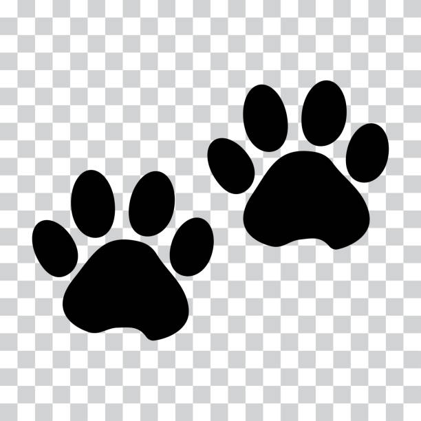Black silhouette animal paw track isolated on transparent background. Vector illustration Black silhouette animal paw track isolated on transparent background. Vector illustration paw stock illustrations
