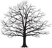 Black silhouette bare tree