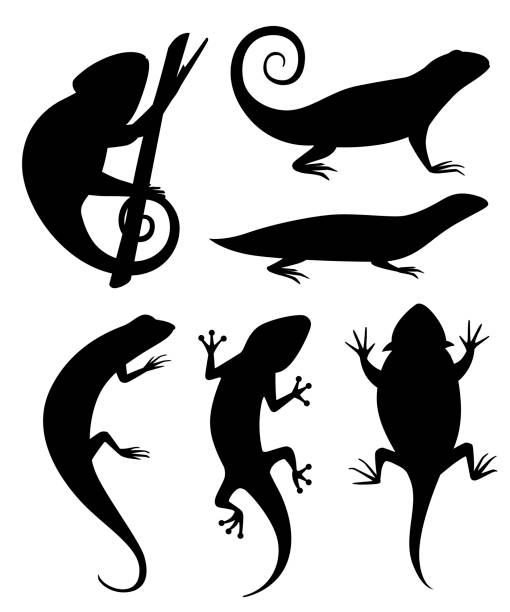 black silhouette. cartoon chameleon climb on branch. small lizards. animal flat icon collection. vector illustration isolated on white background - chameleon stock illustrations