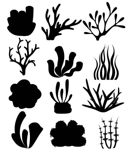 schwarze silhouette. sammlung von korallen und algen. tiefsee-blumen-design. ozean-flora und fauna. flache vektor-illustration isoliert auf weißem hintergrund - algen stock-grafiken, -clipart, -cartoons und -symbole