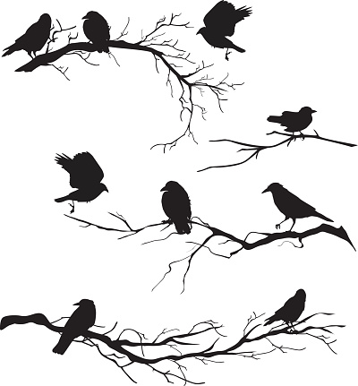 Black Silhouette Crows Perched on Branches of Various Lengths