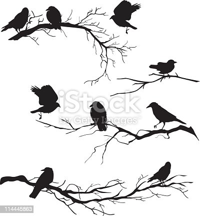 Crows perched on branches.