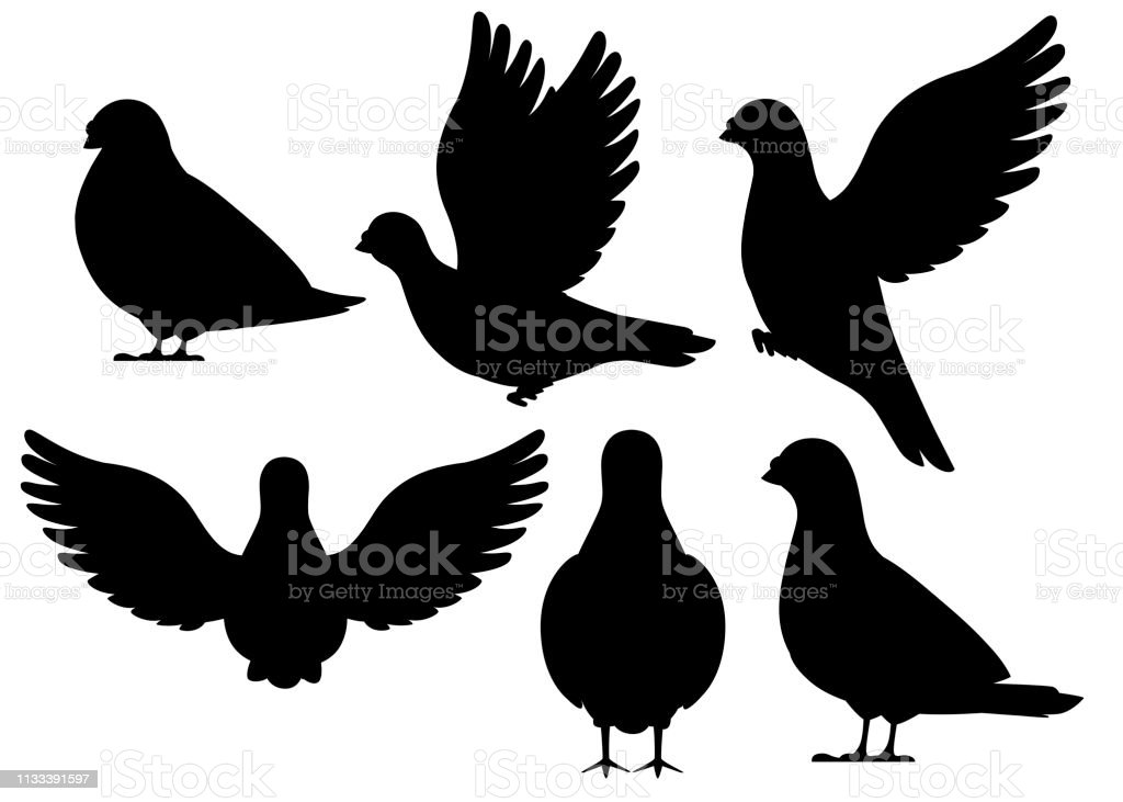 Black Silhouette Icon Set Of Pigeon Bird Flying And Sitting Flat Cartoon Character Design Black Bird Icon Cute Pigeon Template Vector Illustration Isolated On White Background Stock Illustration Download Image Now
