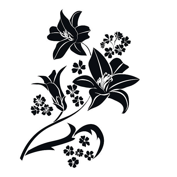 Water Lily Stencil Black And White: Lily Flower Illustrations, Royalty-Free Vector Graphics