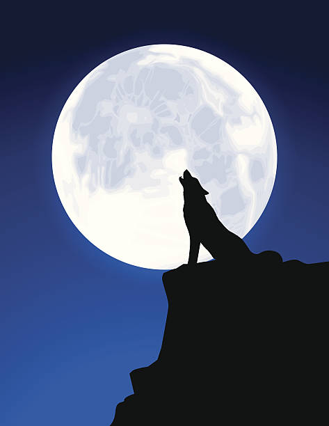 Black Silhouette of a Wolf Howling at a Full Moon Wolf howling in front of a full moon. Files included – jpg, ai (version 8 and CS3), and eps (version 8) werewolf stock illustrations