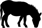 black silhouette of donkey on white background of vector illustration