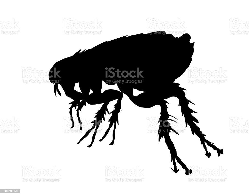 Black silhouette of flea vector art illustration