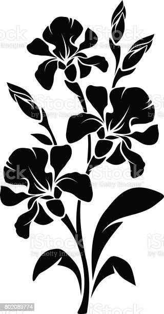 Black silhouette of iris flowers vector illustration vector id802089774?b=1&k=6&m=802089774&s=612x612&h=loxqd68yyoif0ptgvoqgte8pa5ttcxtessale7wifj0=