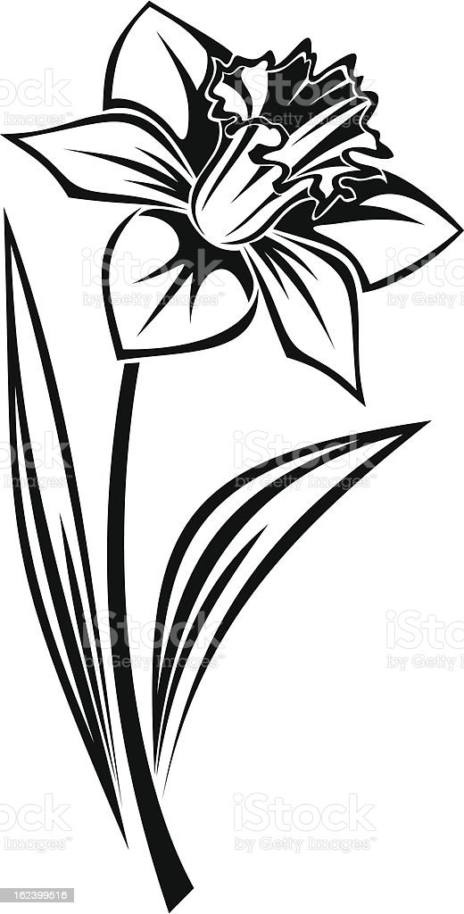 Black silhouette of narcissus flower. Vector illustration. vector art illustration
