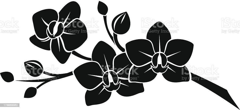 Schwarze silhouette der Orchidee Blumen. Vektor-illustration. – Vektorgrafik