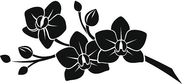 Black silhouette of orchid flowers. Vector illustration. Vector black silhouette of branch with orchid flowers on a white background. orchid stock illustrations