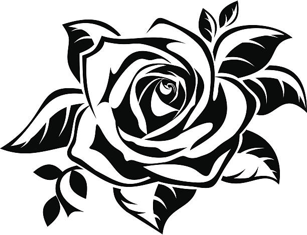 Best Black And White Rose Illustrations, Royalty-Free ...
