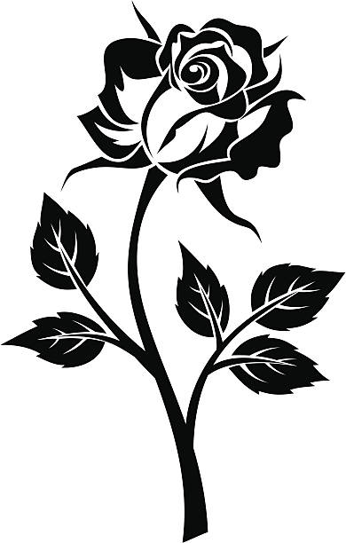 Black And White Rose Illustrations Royalty Free Vector