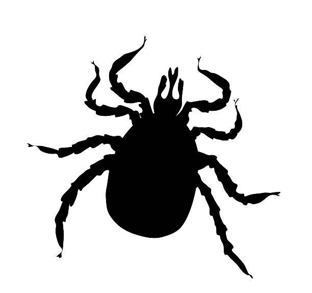 Best Deer Tick Illustrations Royalty Free Vector Graphics
