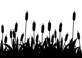 Black silhouette. Reeds in black grass. Reed plant. Green swamp cane grass. Flat vector illustration isolated on white background. Clip art for decorate swamp.