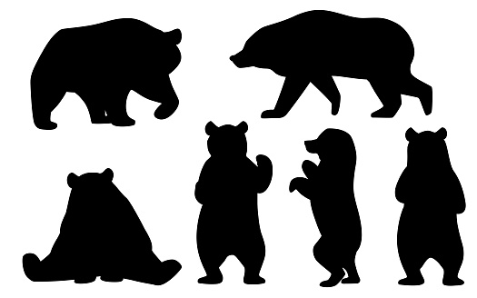 Black silhouette set of Grizzly bears. North America animal, brown bear. Cartoon animal design. Flat vector illustration isolated on white background