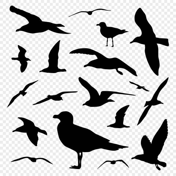 Black silhouette set of seagull on transparent background vector Black silhouette set of seagull on transparent background vector water bird stock illustrations
