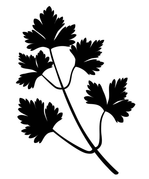 Royalty Free Coriander Leaves Clip Art, Vector Images & Illustrations - iStock