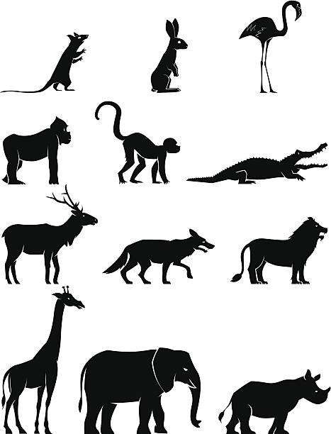 Animal – Vektorgrafik
