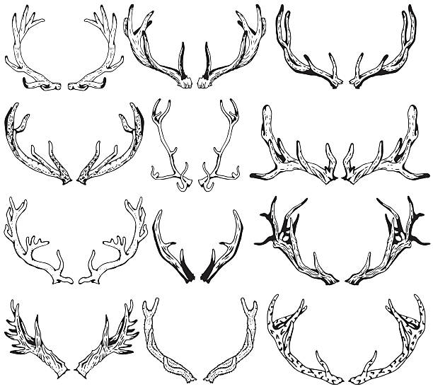 black silhouettes of different deer horns. hand drawn illustration. - deer antlers stock illustrations, clip art, cartoons, & icons