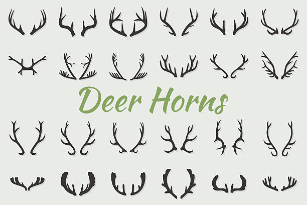 black silhouettes of different deer horns, vector - deer antlers stock illustrations, clip art, cartoons, & icons