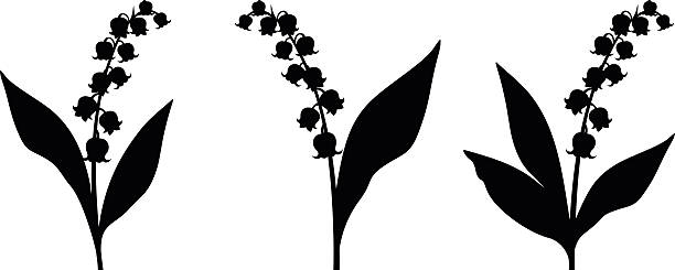 Black silhouettes of lily of the valley flowers. Vector illustration. Set of three vector black silhouettes of lily of the valley flowers on a white background. lily of the valley stock illustrations