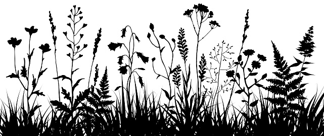 Black Silhouettes Of Meadow Wild Herbs And Flowers ...