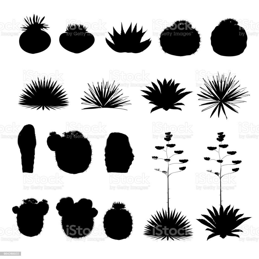 Negro siluetas de cactus redondeos y agave azul. Colección de vector - ilustración de arte vectorial