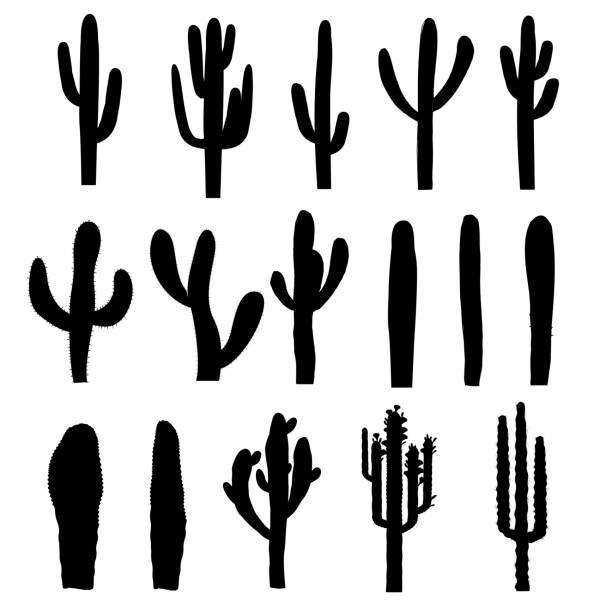 stockillustraties, clipart, cartoons en iconen met zwarte silhouetten van saguaro cactus. vector - cactus