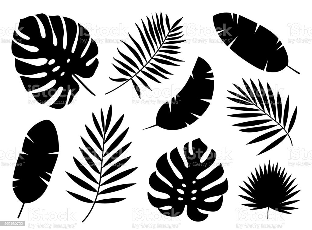 Black Silhouettes Of Tropical Palm Leaves Isolated On White Background Stock Illustration Download Image Now Istock Support us by sharing the content, upvoting wallpapers on the page or sending your own. black silhouettes of tropical palm leaves isolated on white background stock illustration download image now istock