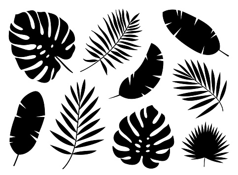 Black silhouettes of tropical palm leaves isolated on white background.