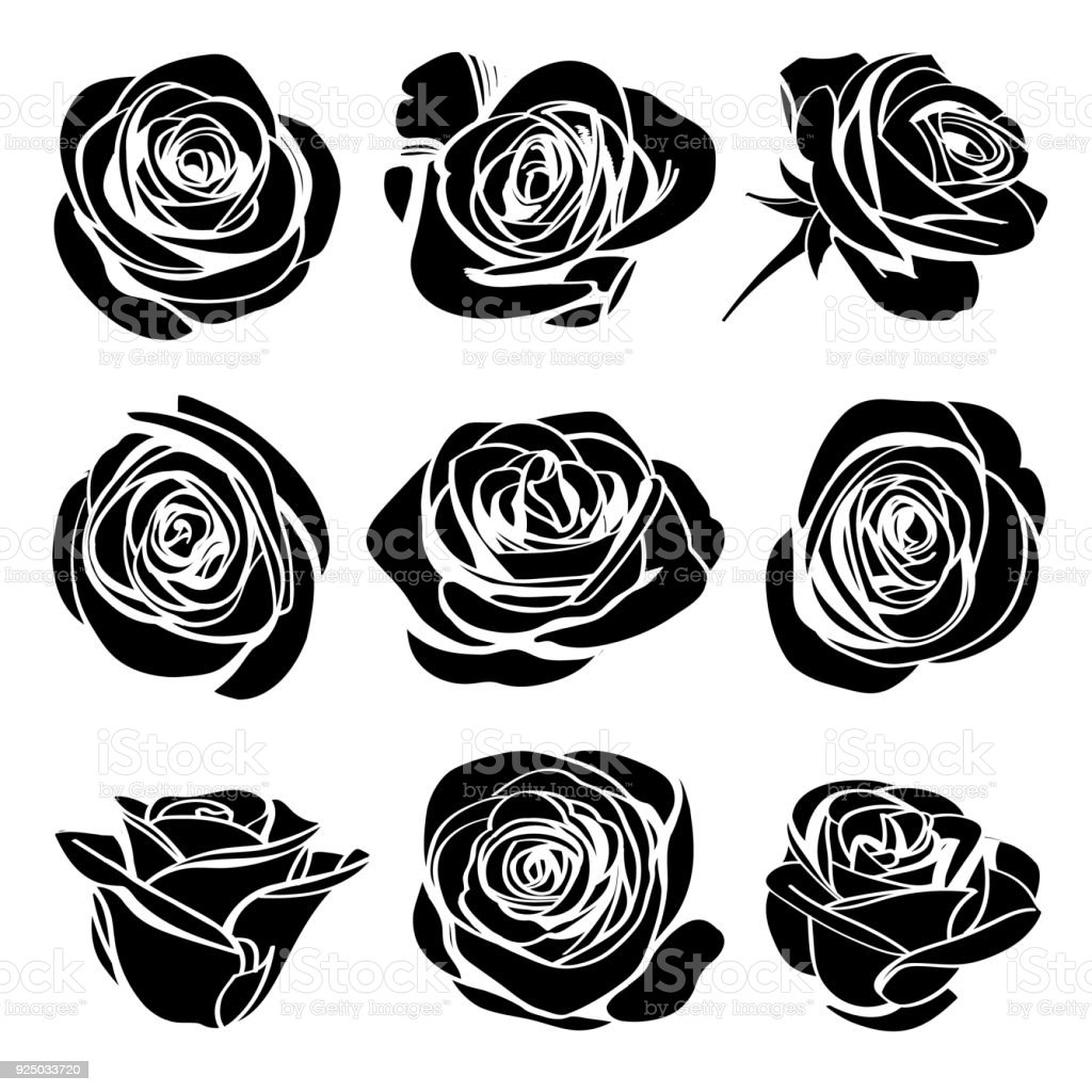 Black Silhouettes Rose Flowers Inflorescence With White Lines