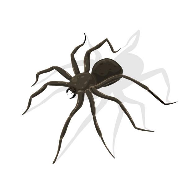 black spider on white background - tarantula stock illustrations