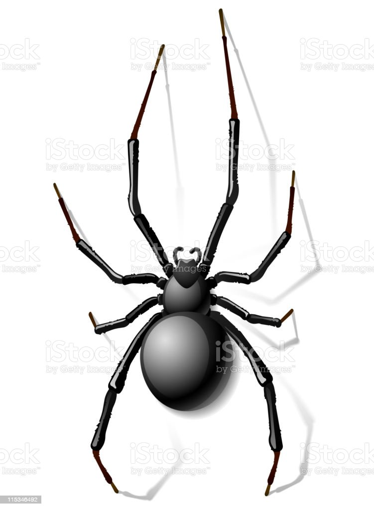 Schwarze Spinne Vektor Illustration 115346492 | iStock
