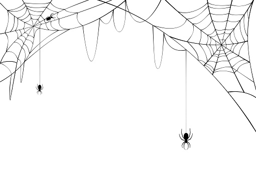 Black spiders with torn web. Scary spider web for Halloween.
