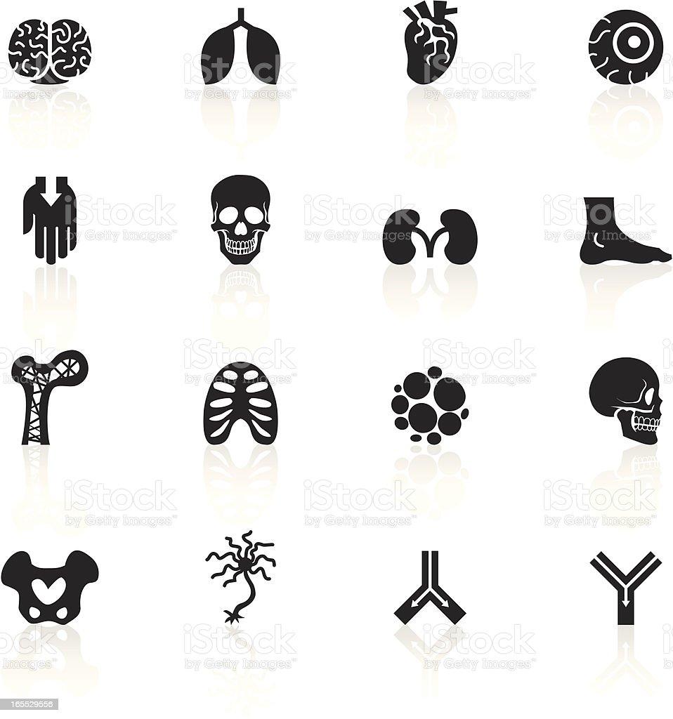 Black Symbols - Anatomy vector art illustration