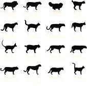 Illustration containing different Felines species: Lion, Lioness, Persian Cat, Lynx, Cougar, Mountain Lion, Leopard, Serval, Siamese Cat, Bobcat, Wild Cat, Jaguar, Puma, Tiger, Cheetah, Domestic Cat, Burmese Cat.
