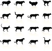 Illustration containing different Felines species: Lion, Lioness, Persian Cat, Lynx, Cougar, Mountain Lion, Leopard, Serval, Siamese Cat, Bobcat, Wild Cat, Jaguar, Puma, Tiger, Cheetah, Domestic Cat, Burmese Cat.
