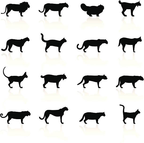 Black Symbols - Felines Illustration containing different Felines species: Lion, Lioness, Persian Cat, Lynx, Cougar, Mountain Lion, Leopard, Serval, Siamese Cat, Bobcat, Wild Cat, Jaguar, Puma, Tiger, Cheetah, Domestic Cat, Burmese Cat. bobcat stock illustrations