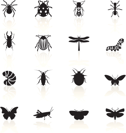 Black Symbols - Insects