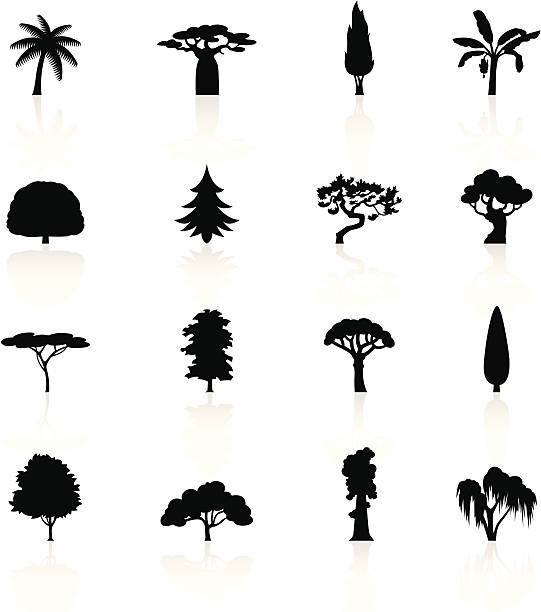 stockillustraties, clipart, cartoons en iconen met black symbols - trees - cipres