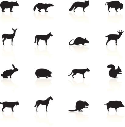 Black Symbols - Wild Animals