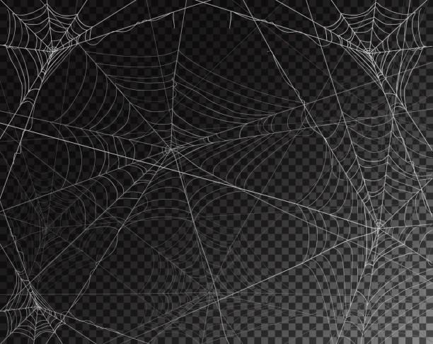 illustrazioni stock, clip art, cartoni animati e icone di tendenza di black transparent background for halloween with spiderwebs - web